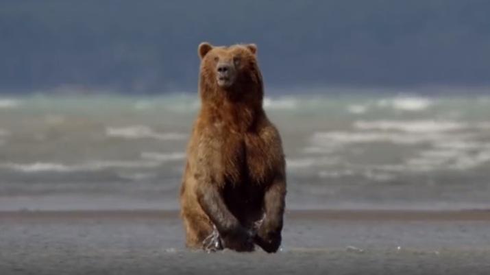 Einwohner Sotschis beschweren sich über Bären