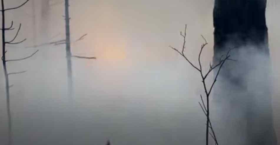 Waldbrände in Sibirien: löschen oder nicht löschen?